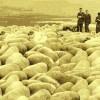 Good Shepherd, 2012,  c-print